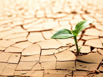چه کسی آب را هدر میدهد؟ مس یا کشاورزی